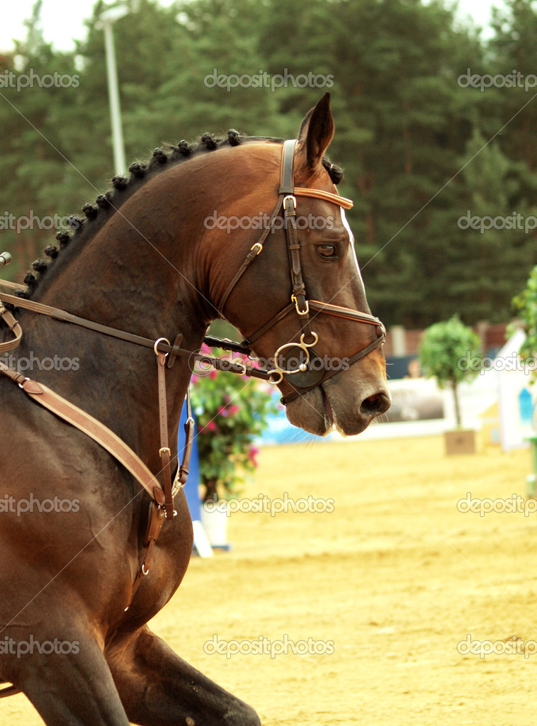 Portrait of jumping horse