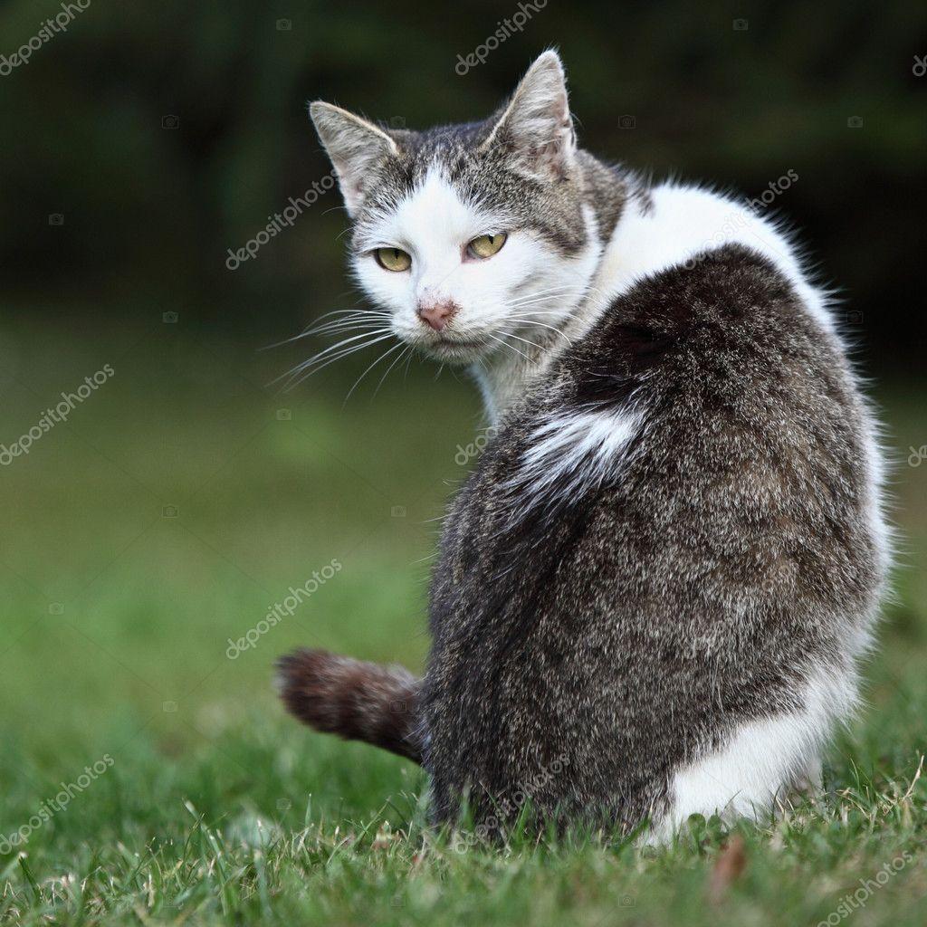 Cute kitty cat sitting on a green lawn — Stock © lightpoet