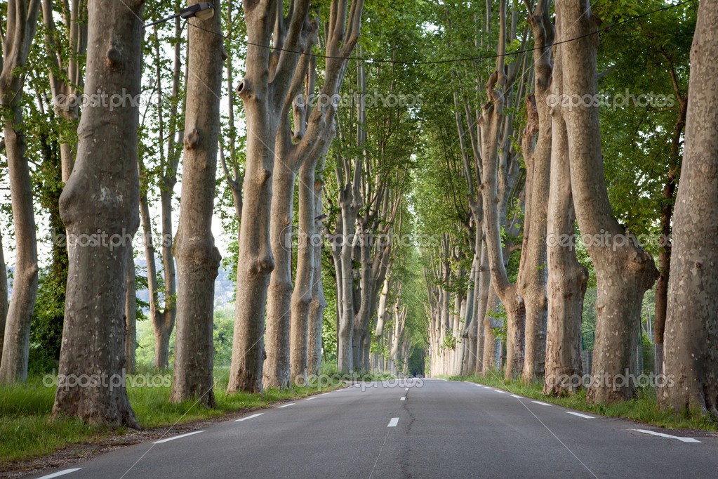 Lovely, empty country road lined with sycamore trees in Provence