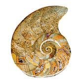 pozůstatky prehistorického moře shellu