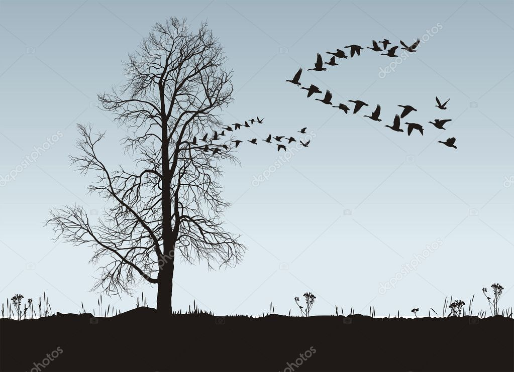 Chestnut and Wild Geese