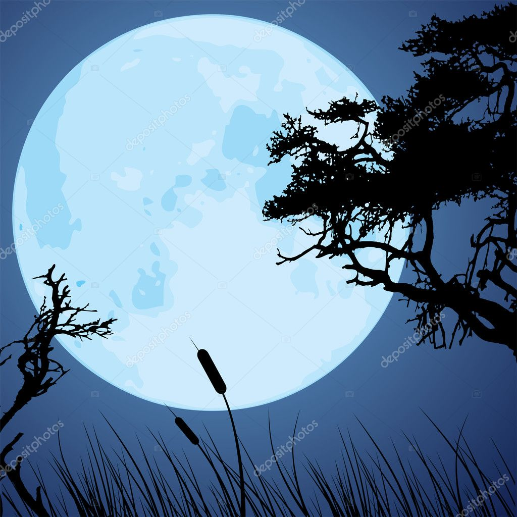 Moon and silhouettes of tree branches