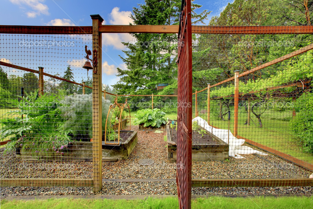 Beautiful Summer Vegetable Garden With Fence And Herbs U2014 Photo By Iriana88w