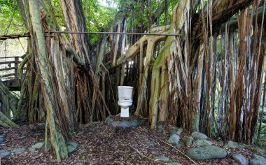 Toilet in the jungle. Maui. Hawaii. Eco house.