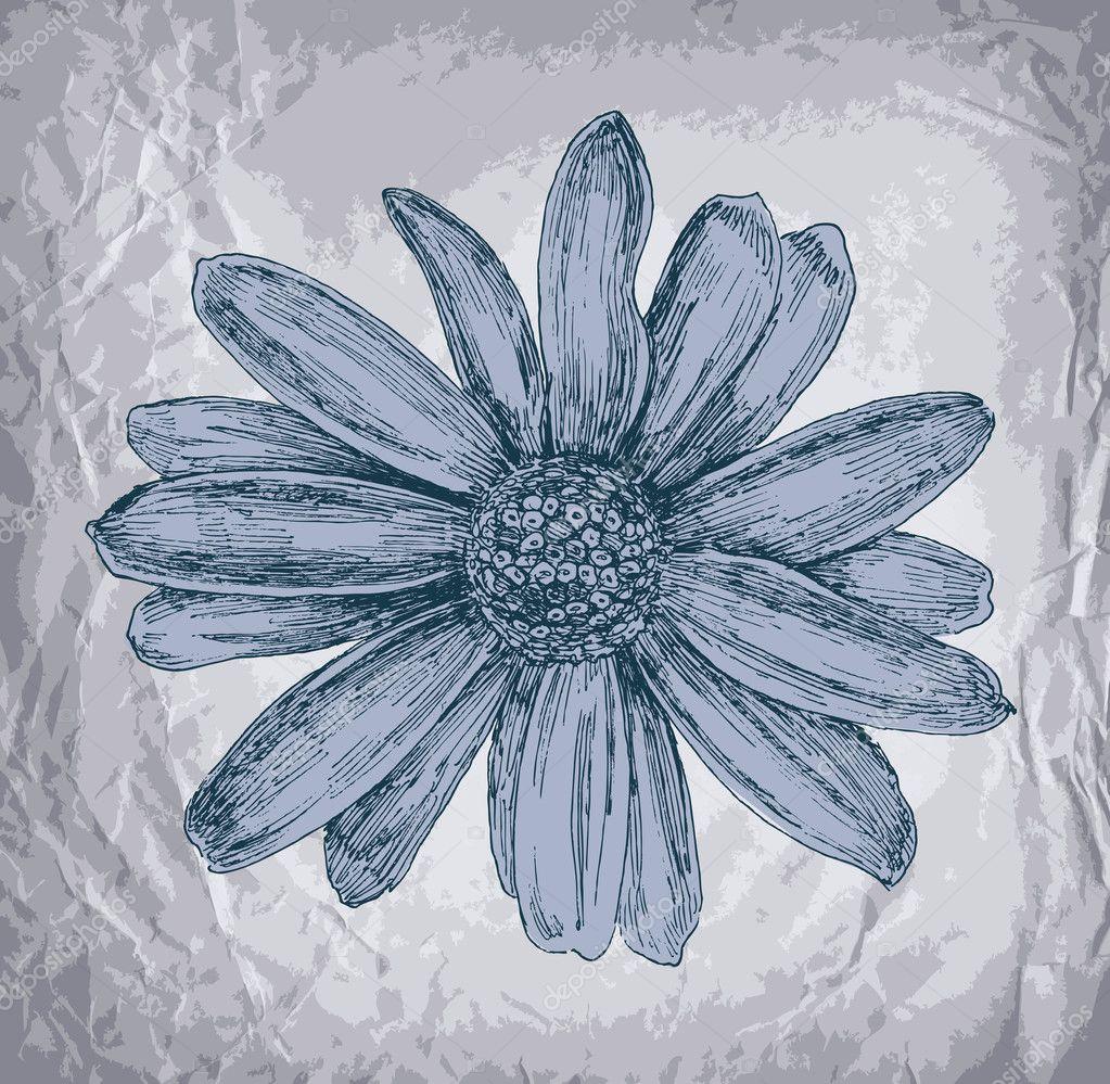 Beautiful Gerber Daisy