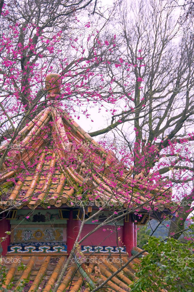 Cheeryblossom and temple in Taiwan