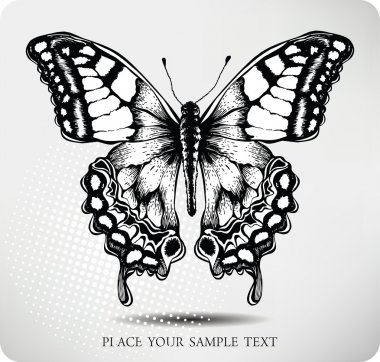 Butterfly hand drawing. Vector
