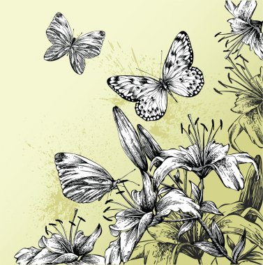 Background with blooming lilies and beautiful butterflies, hand-drawing. Ve