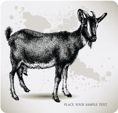 Black goat with horns, hand-drawing. Vector illustration