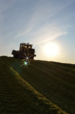 The bulldozer rams a silage hole at an evening dawn.