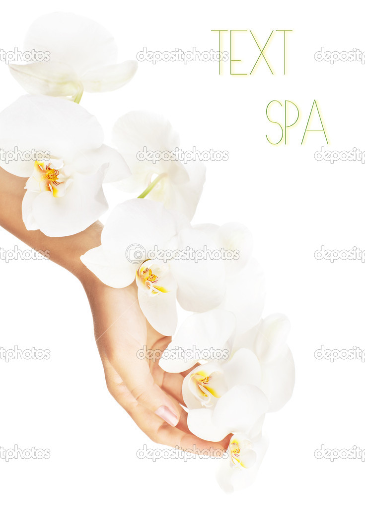 Fresh white orchid in female hands