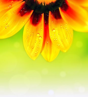 Abstract flower colorful floral background