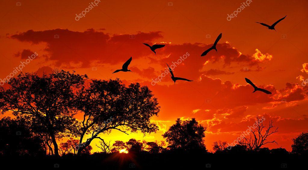 Landschaft afrikas mit warmen sonnenuntergang stockfoto - Paisaje con colores calidos ...