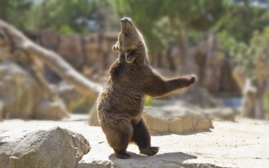 Great happy dancing bear