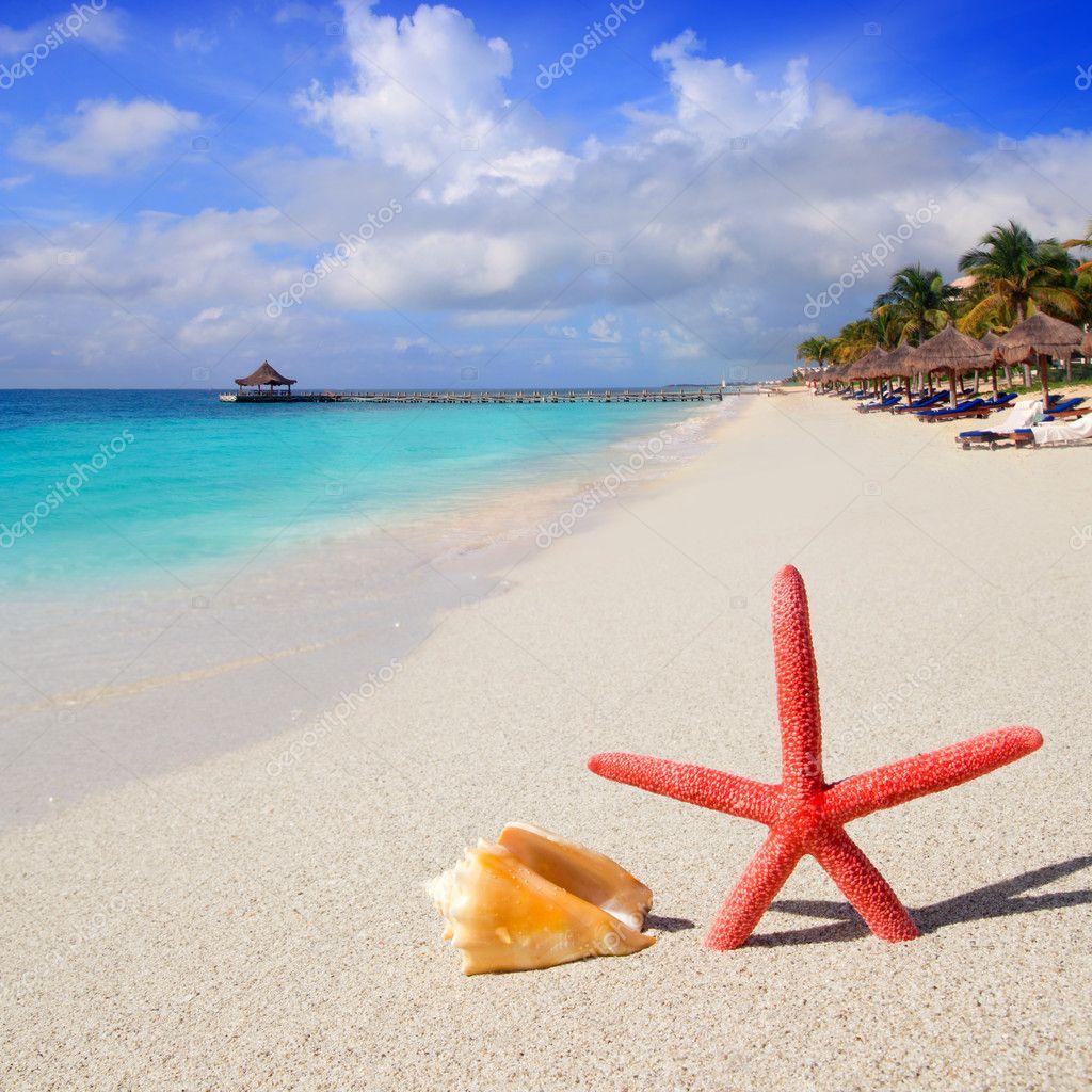 Stella di mare spiaggia e conchiglie sulla sabbia bianca - Immagini di spongebob e sabbia ...