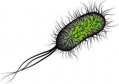 E coli Bacteria isolated on white background