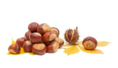 Autumn still life - fruit and leaves of chestnut.