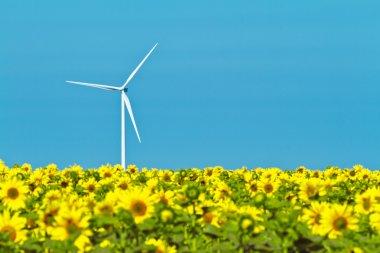 Windmills and sunflowers