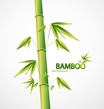 Bamboo stem abstract nature background