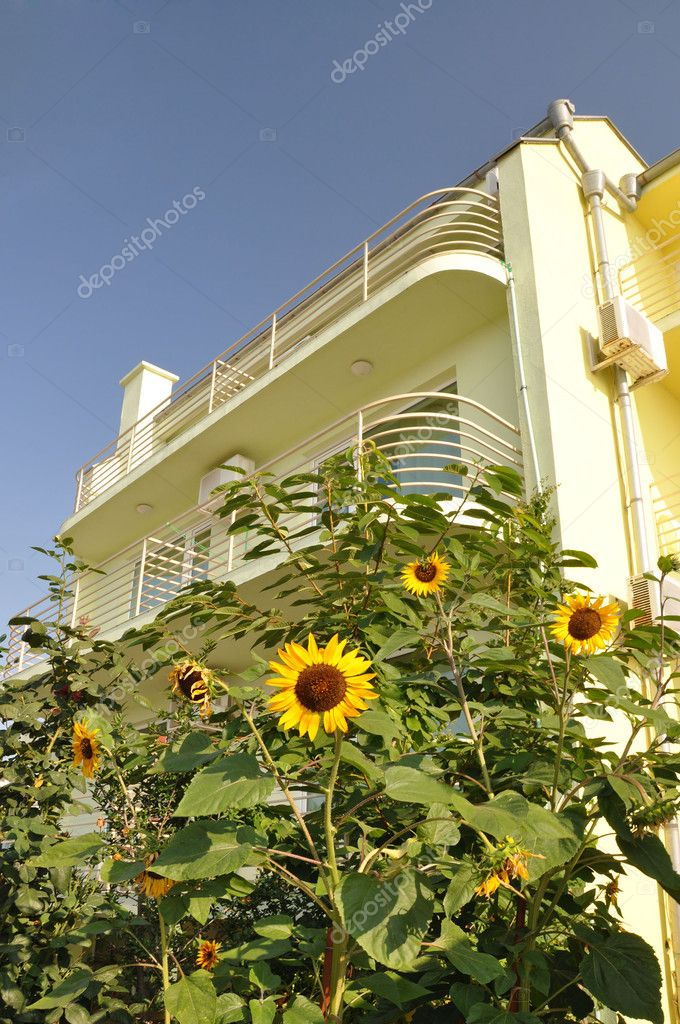 Sunflower in front of the villa.