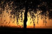 Fotografie větve ráno