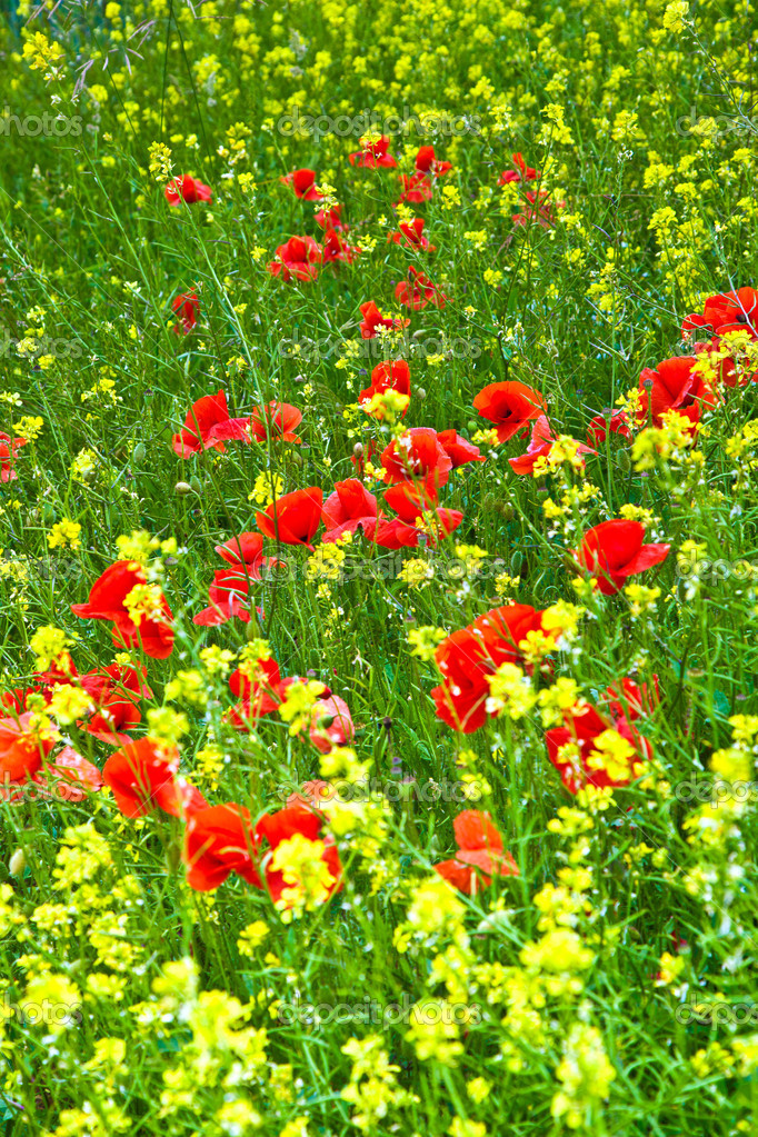 Beautiful wild flowers in the meadow