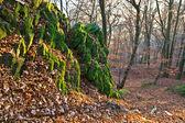 Oak forest na podzim