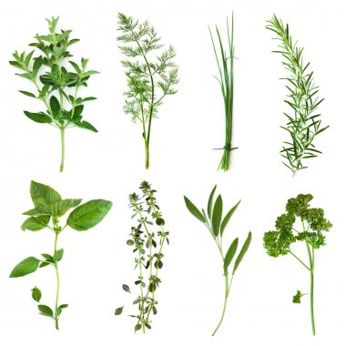 Herbs collection, isolated on white. Includes oregano, dill, chives, rosemary, basil, thyme, sage and curly parsley. stock vector