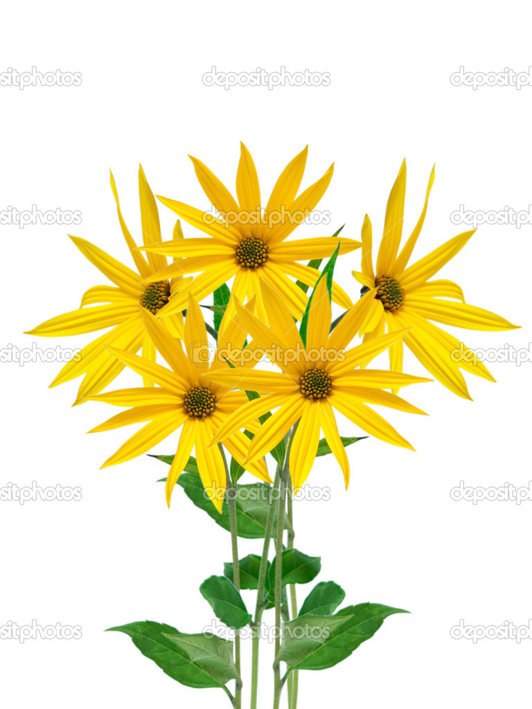 Yellow Flowers Stock Photo Maxpayne 7548331