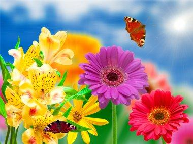 Gerber flowers
