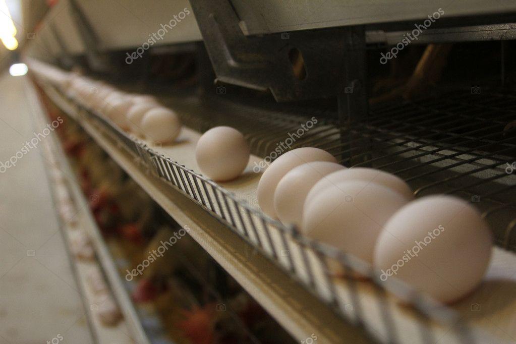 Poultry farm