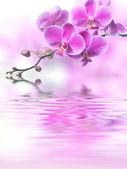 Fotografie krásné fialové květy orchidejí odráží ve vodě