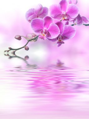 Beautiful purple orchid flowers reflected in the water