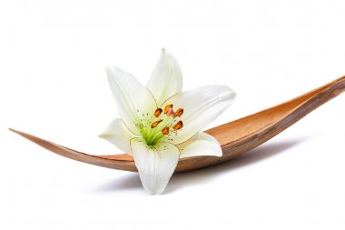 Lily flower on a coco palm leaf, isolated on white