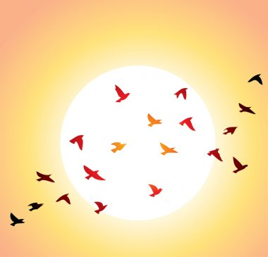Flying birds and bright sun