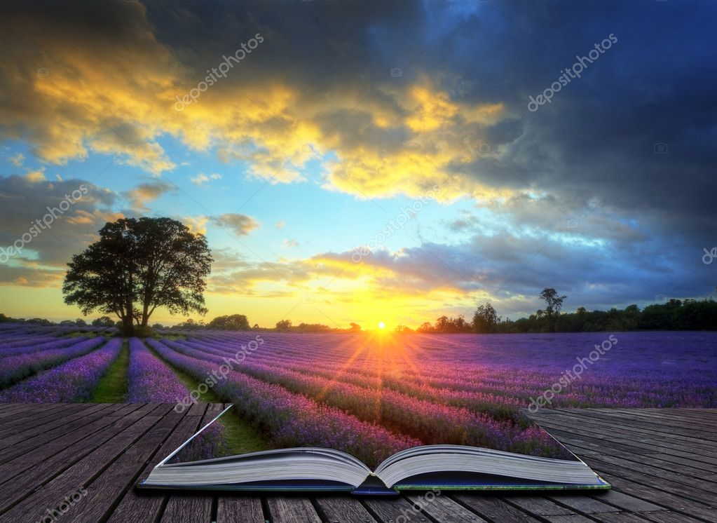 Creative concept image of atmospheric sunset lavender fields i