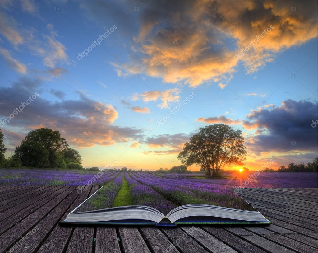 Creative concept image of lavender in Summer sunset in page sof