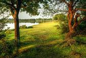 kouzelné fantazie styl lesní scény s jezerem při západu slunce