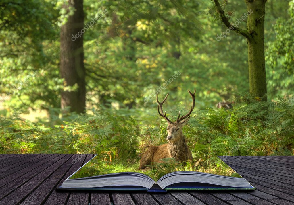 Creative concept of Red Deer Stag coming out of pages in magical