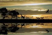 krásná Africká tématikou silueta s nádherným západem slunce obloha