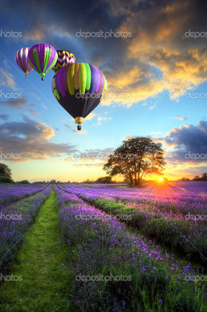 Beautiful image of stunning sunset with atmospheric clouds and sky over vibrant ripe lavender fields in English countryside landscape with hot air balloons flyi