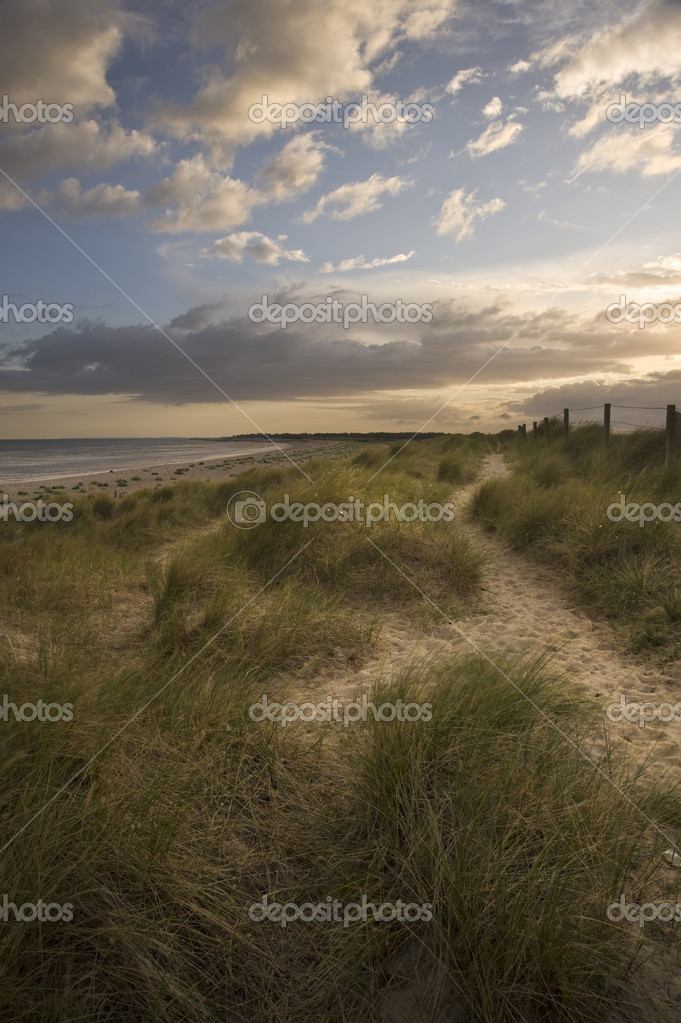 Moody sunset over grassy sand dunes at beach