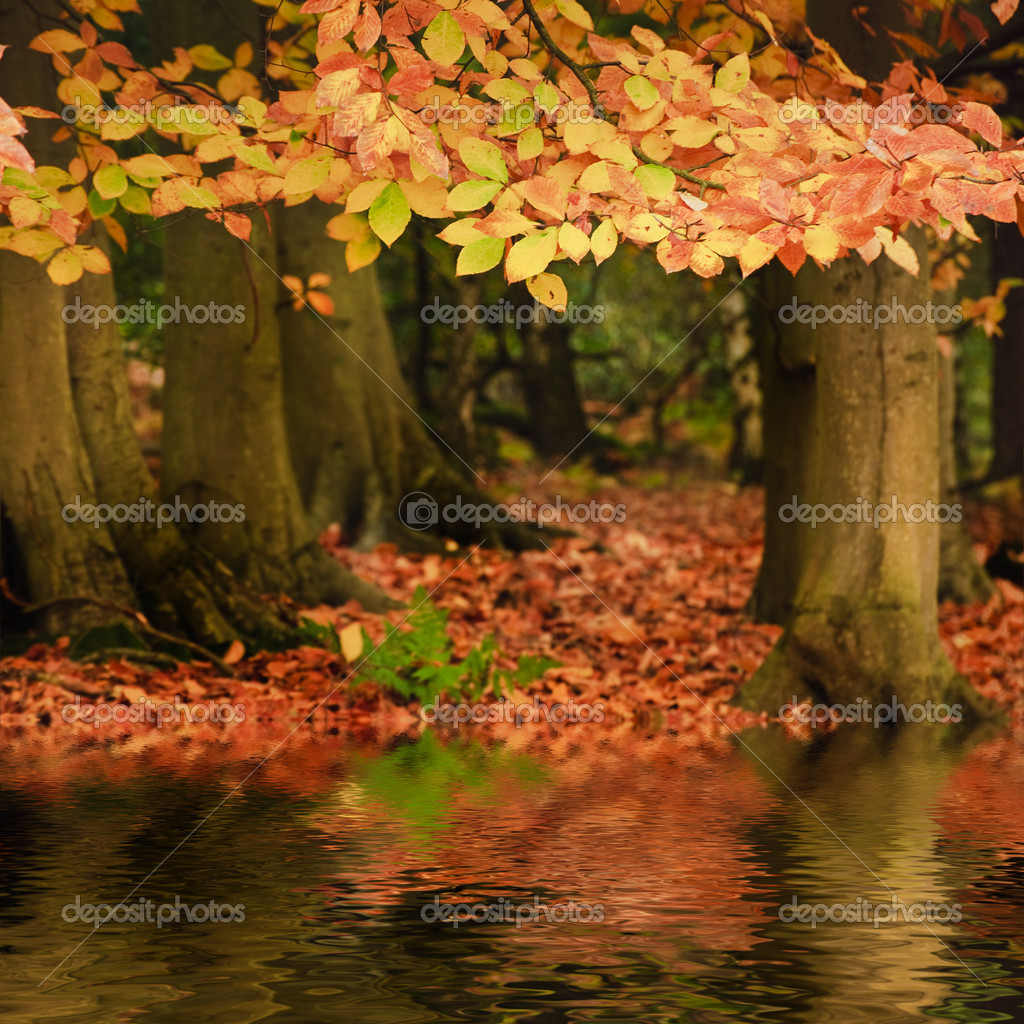 Beautiful Autumn Fall forest vibrant landscape reflected in wate