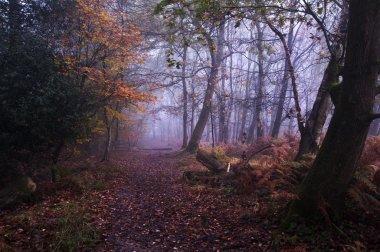 Path through foggy misty Autumn forest landscape at dawn