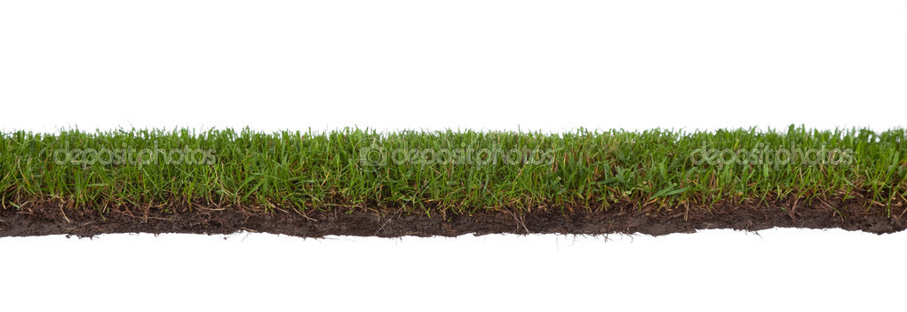 Cross section of grass, isolated on white background