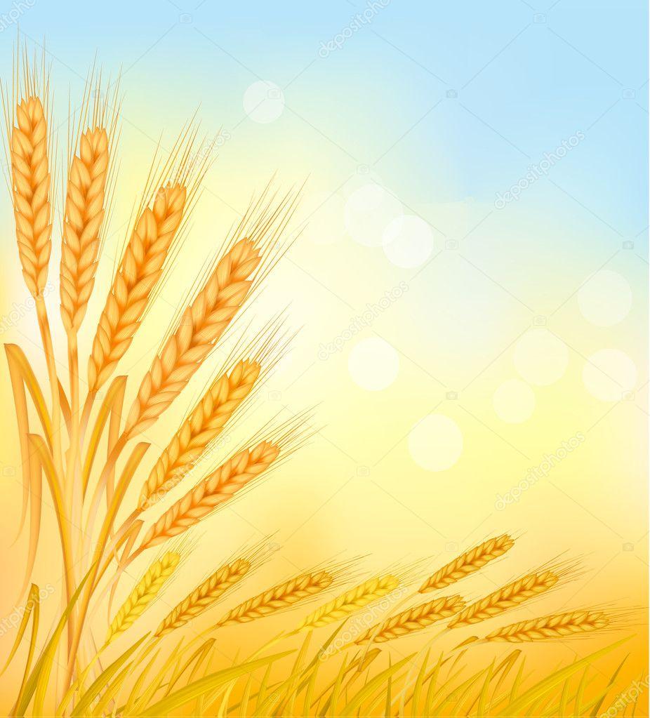 Открытка с колосьями пшеницы, свадьбу