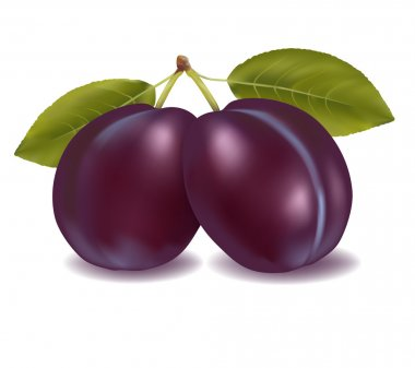 Two plums with leaf. Vector illustration