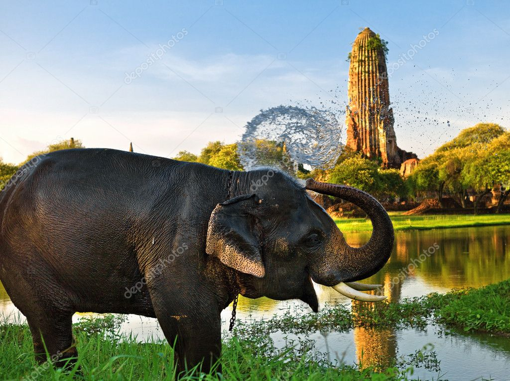 Elephant bathing in Ayutthaya