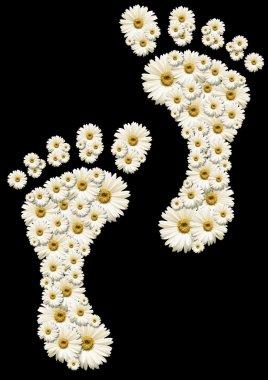 Daisy footprints