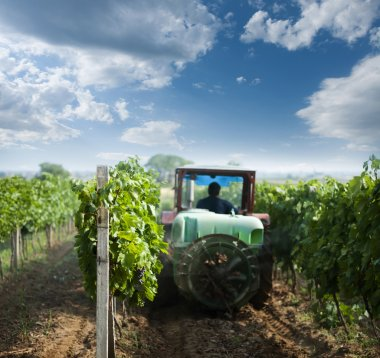 Tractor spraying vineyards with chemicals